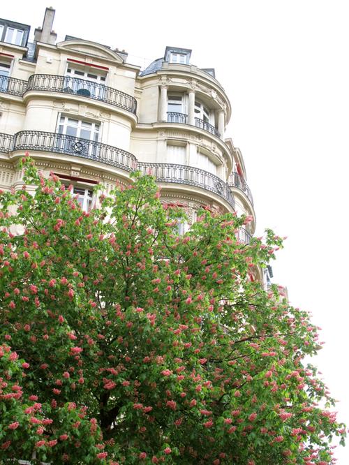 Parisan Marroniers en fleurs