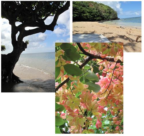 Kauai 3 corine gantz