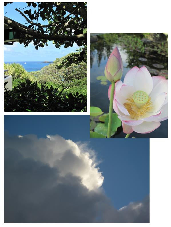 Kauai corine gantz