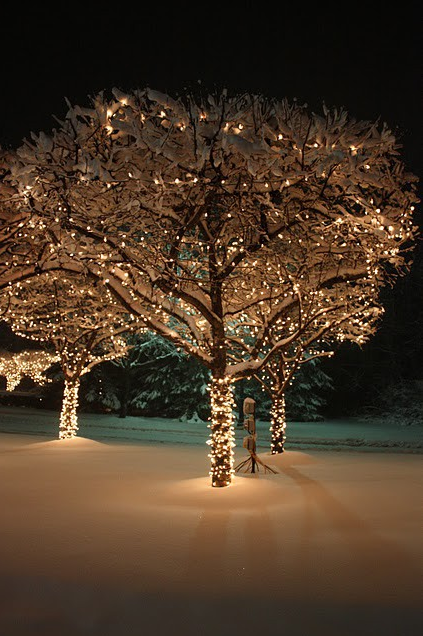 Christmas tree lights in snow