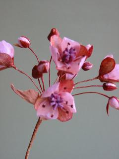 Floweringrush4
