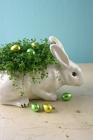 Bunnyplanter