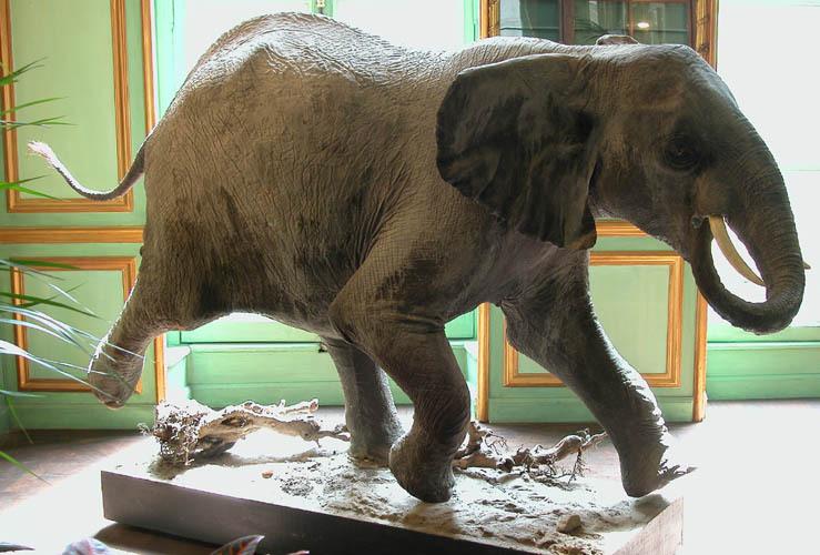 Jpg_elephant3