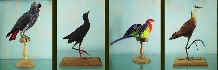 L435xh140_jpg_oiseaux93930
